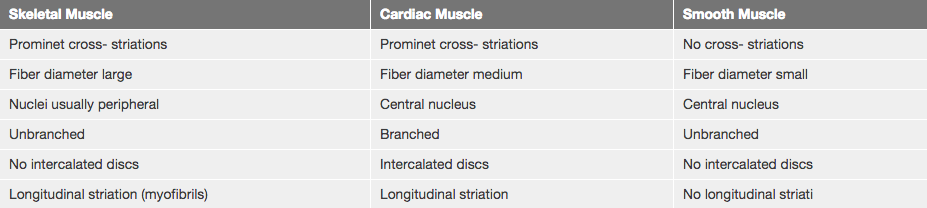 difference between cardiac and skeletal muscle