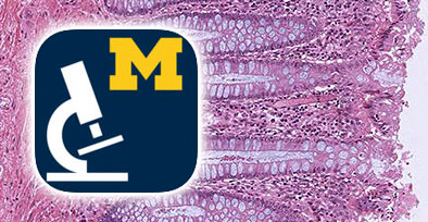Histology at the University of Michigan | histology