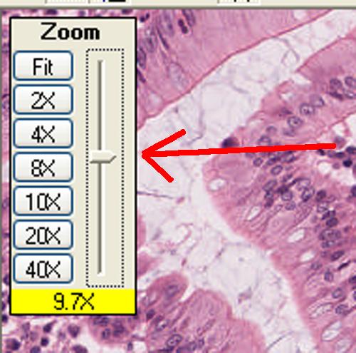 ImageScope Zoom Control
